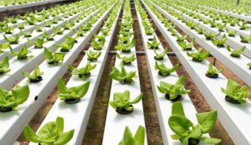 В США признали, что гидропоника относиться к органическому производству.