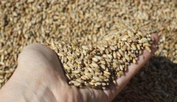 Правительство рассмотрит закон о производстве органической продукции