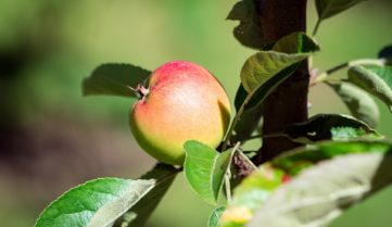 Органический реванш. Эксперты прогнозируют стремительный рост числа производителей органической продукции