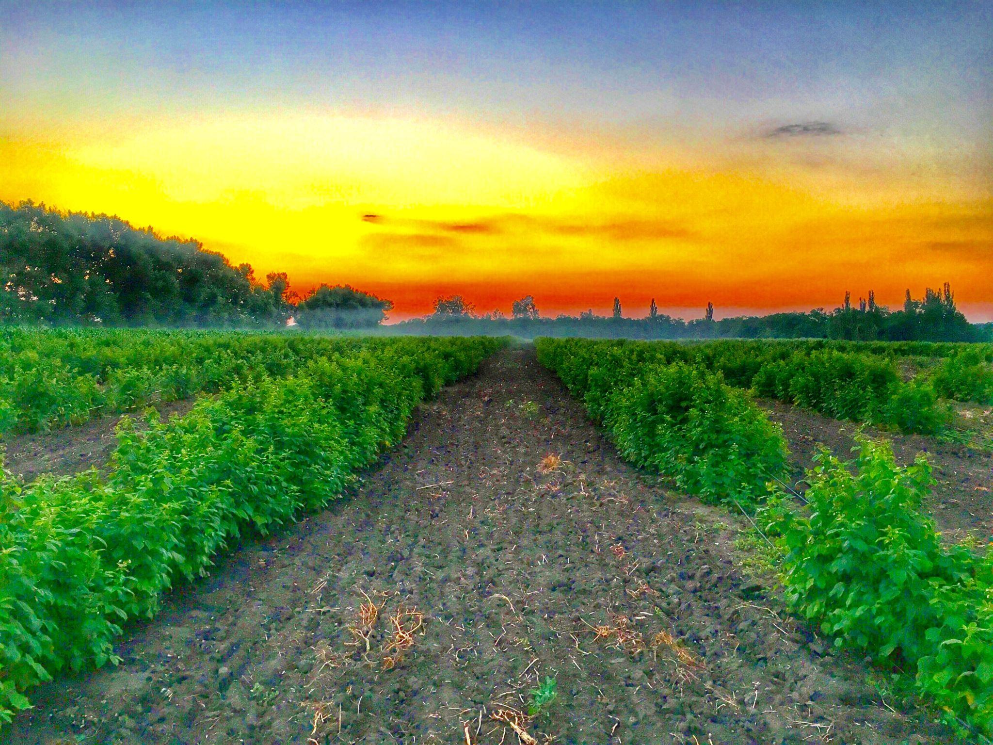 Закат на нашей ферме
