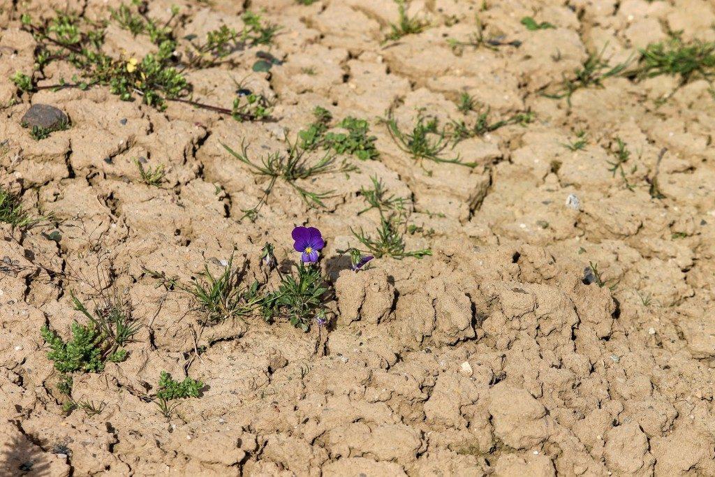 «Органическое» сельское хозяйство: Pro et Contra (взгляд почвоведа)
