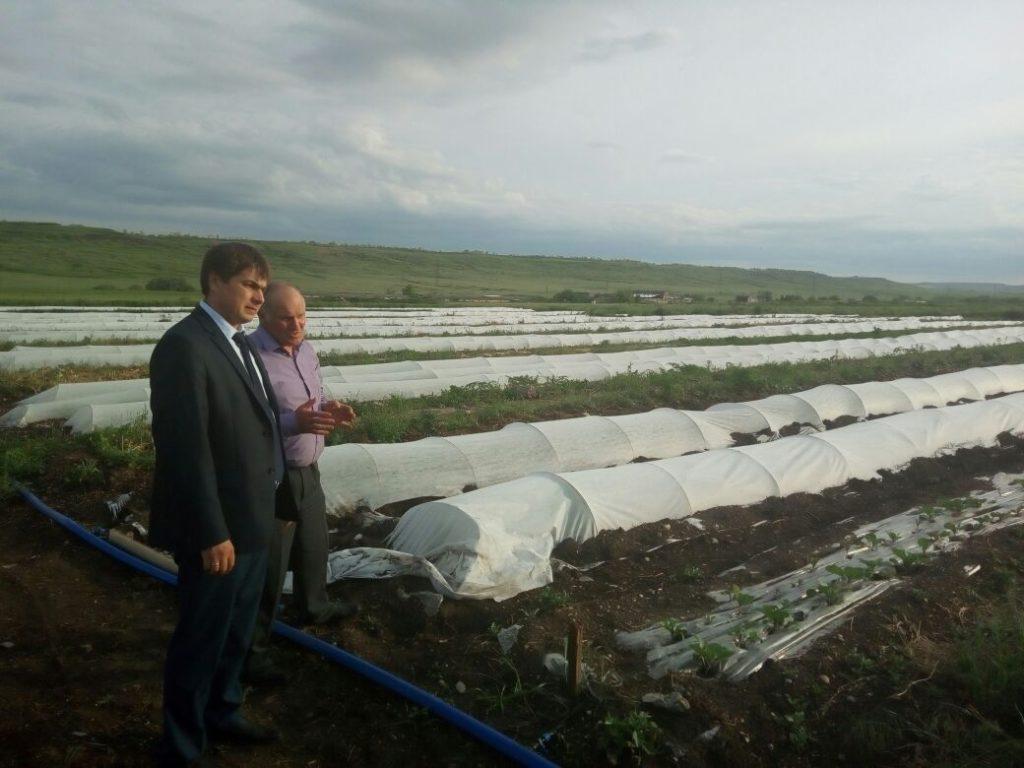Ставропольские аграрии внедряют органическое земледелие