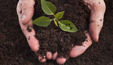 Без почвы под ногами. Деградация земель лишает аграриев прибыли.