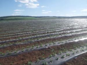 Агропромышленный холдинг «Андрюшкино»