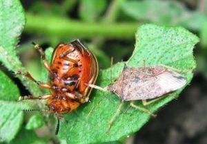 Биологическую защиту растений и развитие органического сельского хозяйства обсудят в Краснодаре