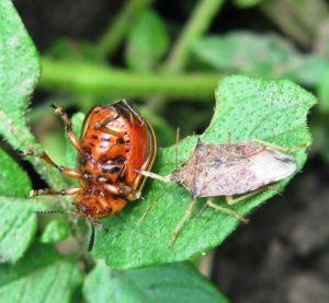 Биологическую защиту развитие органики обсудят в Краснодаре