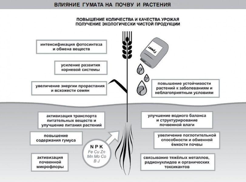 Влияние гумата на почву и растения