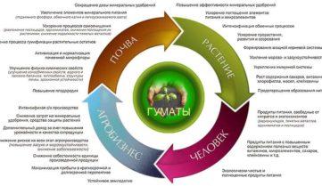 Гумат – биостимулятор, незаменимый для достижения максимального роста урожая и сохранения его качества в органическом земледелии