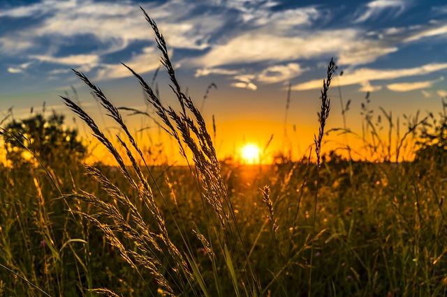 Минсельхоз хочет изменить систему агрострахования