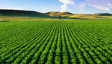 Развитие производства органической продукции в Ставропольском крае – одна из приоритетных задач министерства