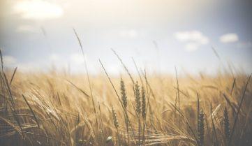 Органическое сельское хозяйство – наиболее ответственная форма сельскохозяйственной деятельности — Сергей Коршунов