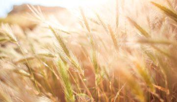 2018 год под знаком органического земледелия